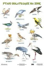 Harmonia  Plansza Ptaki odlatujące na zimę Ptaki pozostające na zimę