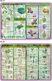 inne Podkładka edukacyjna. Budowa rośliny i kwiatu, cykl rozwojowy - glony, grzyby, mchy, paprocie