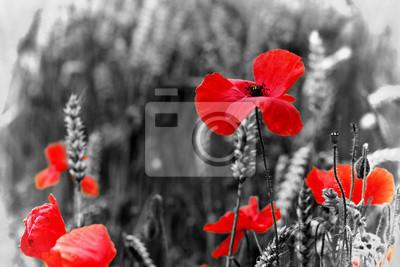 EdwardSamuel Fototapeta czerwony, jeden, wojna, świat, kwiaty