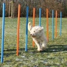 Trixie slalom dla psa słupki 12 szt.
