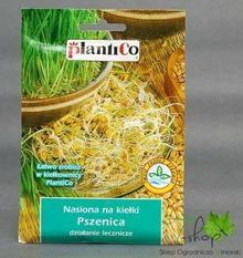 PlantiCo Nasiona na kiełki PSZENICA 50g
