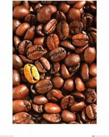 Złote Ziarno Kawy - metamorfoza II - Obraz, reprodukcja