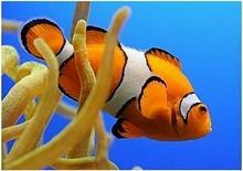 Nemo - Obraz, reprodukcja