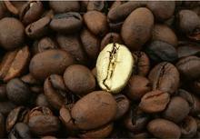 Komar Złote Ziarno Kawy - metamorfoza - fototapeta
