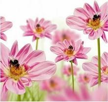 Kwiaty - reprodukcja