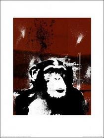 Małpa - Obraz, reprodukcja