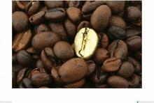 Złote Ziarno Kawy - metamorfoza - Obraz, reprodukcja