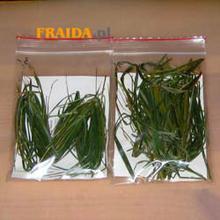 Fraida.pl Sweet Grass 1