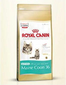 Royal Canin Maine Coon 36 10 kg