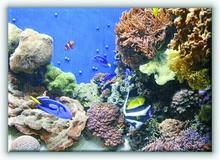 Monterey aquarium - Obraz na płótnie