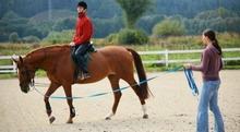 Nauka jazdy konnej - Katowice
