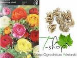 Opinie o Ogrodnictwo Wiśniewski Jaskier Ranunculus mix