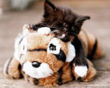 Mały Kotek i Tygrysek Plakat