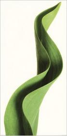 Tulipan, Liść tulipana - Obraz, reprodukcja