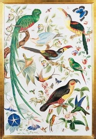 Trefl Egzotyczne ptaki 26064
