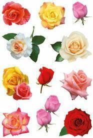 Dystrybucja Melior Naklejki HERMA Decor 3308 kolorowe róże
