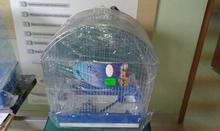 Inter-Zoo klatka dla ptaków megi ocynk