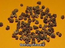 PNOS (W) Nasiona na kiełki - Burak