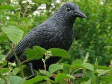 Kruk - wizualny odstraszacz ptaków