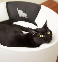 Mykotty OTI Legowisko dla kota