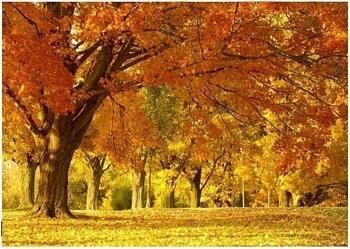 Jesienny KajObraz - reprodukcja