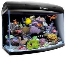 Aquael Moduł Diody Led Reefmaster 60- Rób Zakupy I Zbieraj Punkty Payback - Darmowa Wysyłka Od 99 Zł