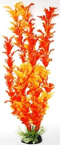 Opinie o Hailea Roślina akwariowa Synnema pomarańczowa 10 cm 15187236