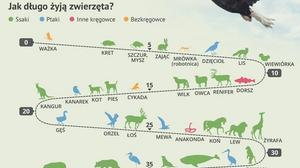 Fascynujące fakty ze świata zwierząt [INFOGRAFIKA]