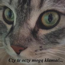 kocilapka50 kobieta Biała Podlaska -  (Chyba) wiem czego chcę :-)