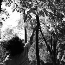 Ivka78 kobieta Warszawa -  Szczęśliwe chwile to motyle.....