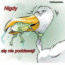 bob59 mężczyzna Jasło -  Przeczytaj opis i ....