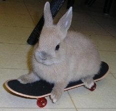 Kochamy króliki miniaturki
