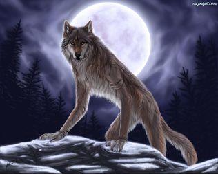 -////  Werewolf -wilkołak  ////-