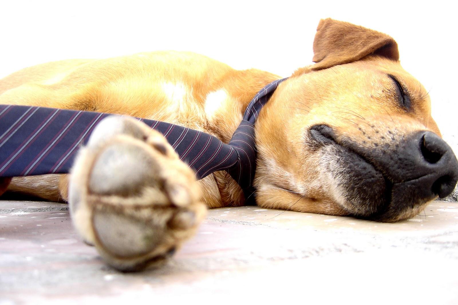 dog+tie+relax.jpg