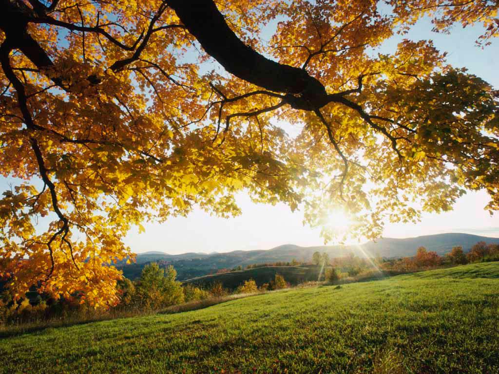 Autumn%2BLeaves.jpg