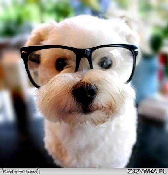 Kocham Psy ! ♥♥♥