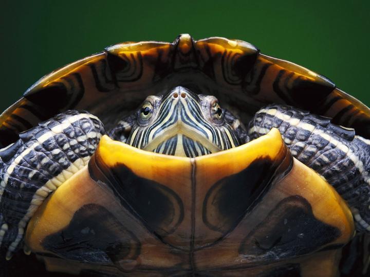 Kocham Żółwie