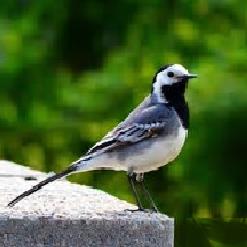 Dzikie ptaki ciekawostki