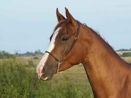 Konie i kucyki<3
