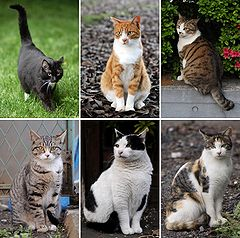 240px-Collage_of_Six_Cats-01.jpg