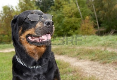 4599789-psy-ras-rottweiler-w-okulary-a-tle-trawy.jpg
