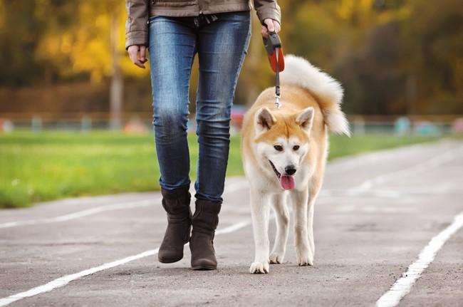 nauka-chodzenia-psa-na-smyczy781.jpg