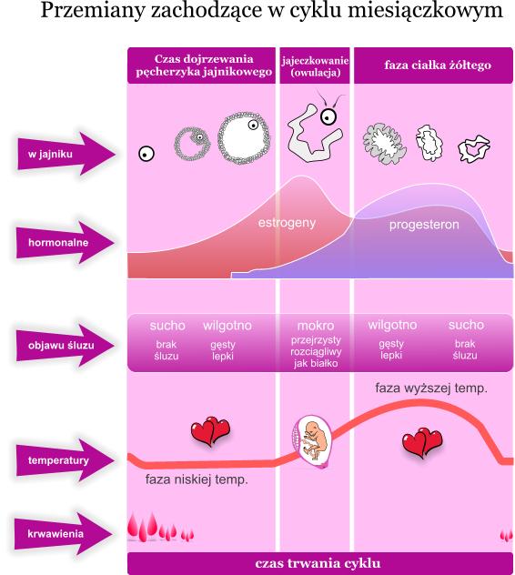 cycle_vs_fertility3.png?1243901639
