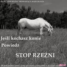STP PRZEMOCY WOBEC KONI!!!
