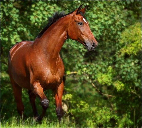 My nie krzywdzimy koni ! Bo je kochamy