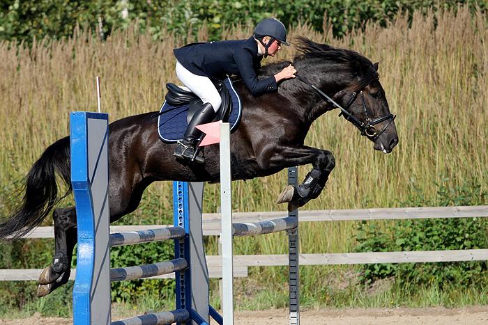 Finnhorse_jumping.jpg