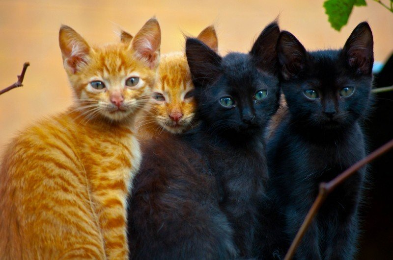 cats-group-photo.jpg