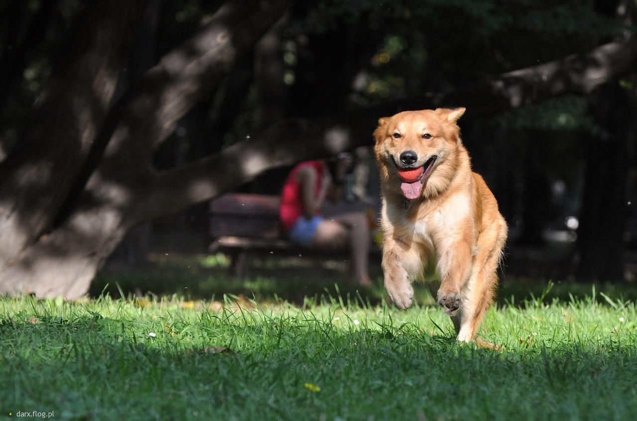 3505232_szczesliwy-pies.jpg