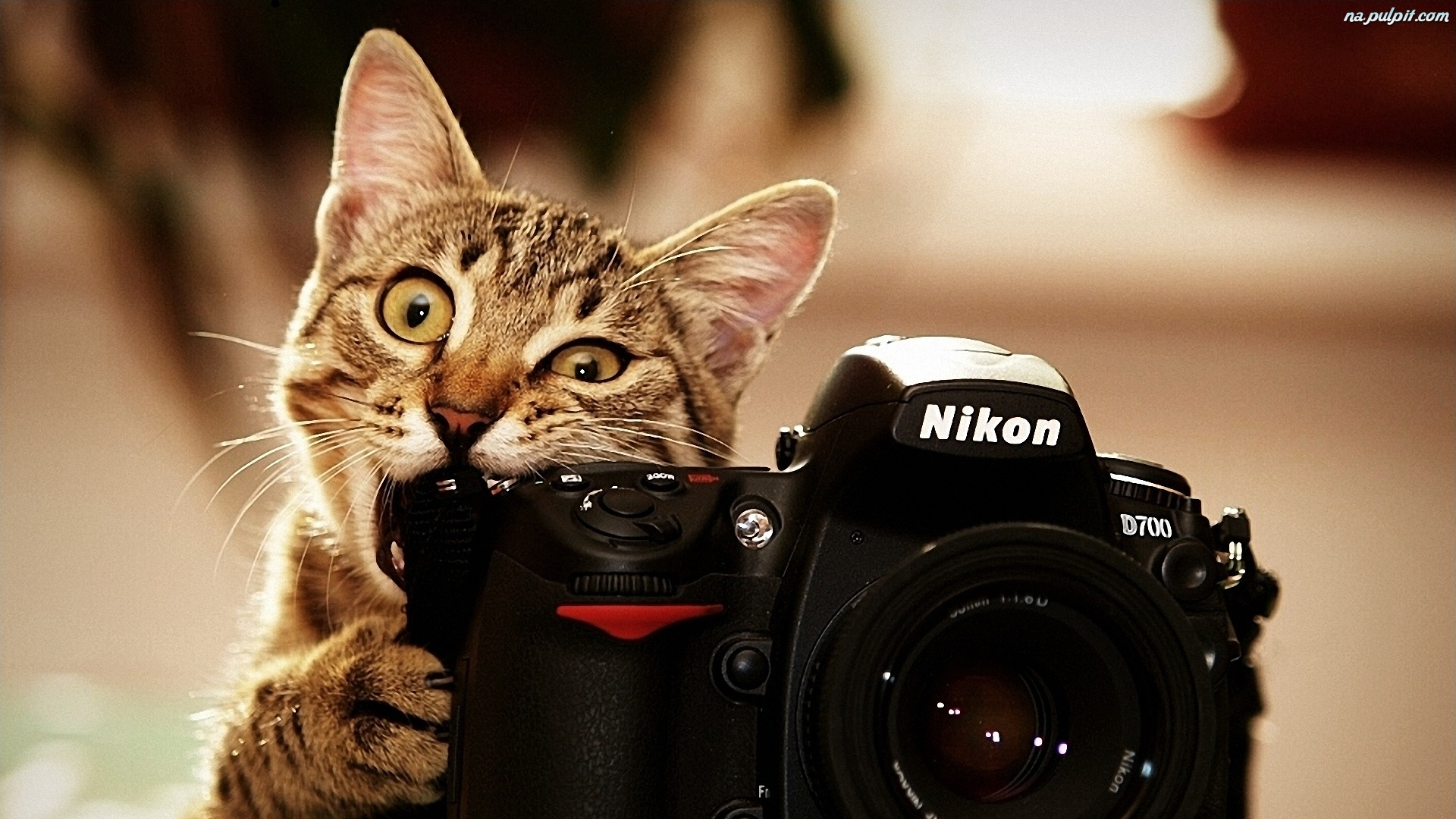 kotek-fotograf-aparat.jpeg