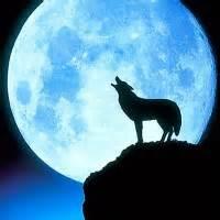 Miłośnicy Wilków~`